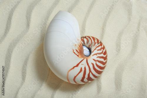 Nautilus. Seashell on sand background.