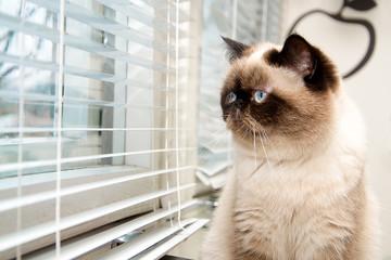 Cat sitting near window blinds