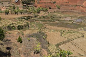 AGRICULTURE MADAGASCAR