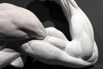 Sculpture of strong muscular arm