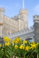 Spring Flowers in front of Whitstable Castle