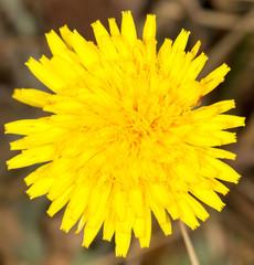 beautiful  flower. close-up