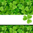 St. Patrick's day vector card with shamrock.
