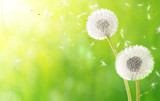 breath of spring - new life and allergy