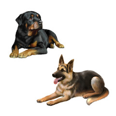 german shepard dog and Rottweiler laying isolated on white