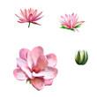 Pink magnolia flower, Spring bloom, Lotus, water lily