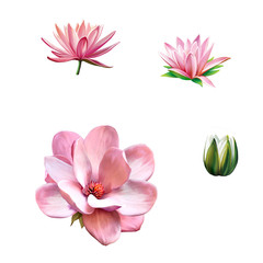 Pink magnolia flower, Spring bloom, Lotus, water lily