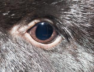 rabbit eye. close-up
