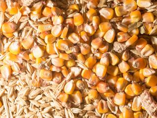 wheat and maize