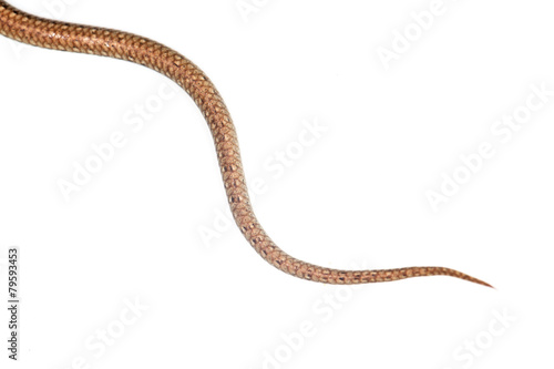 Poster tail of the snake on a white background