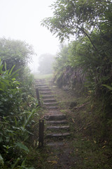 Stairs in the middle of a forest in Paranapiacaba, Brazil
