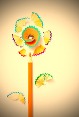 pencil flower on white