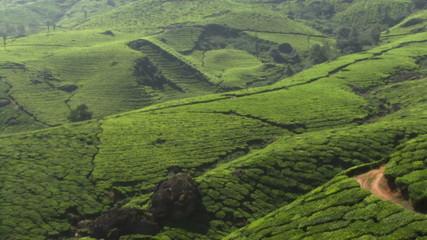MS, Pan, Hills view on tea plantation, India, Munnar, Kerala