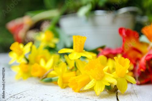 Fotobehang Narcis Frühling: Gartensaison eröffnet :)