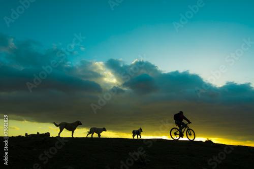 Fotobehang Wielersport hayvansever bisikletçi