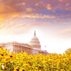 Capitol building Washington DC daisy flowers USA