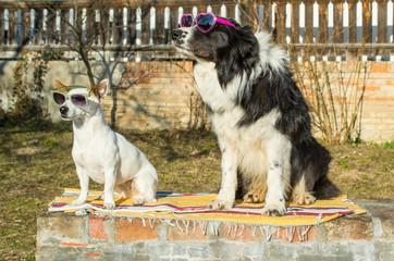 Dogs sitting in garden in sunglasses and enjoy sunbathing