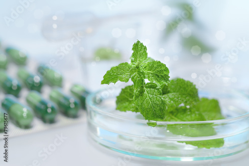 Peppermint capsules, research and development - 79615677