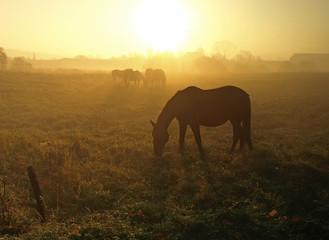 horses in the morning fog
