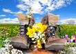 Frühling Wiese Schuhe