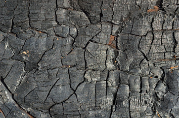 Burned wood 8