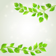 Two branches with green leaves