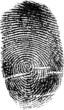 Zdjęcia na płótnie, fototapety, obrazy : black finger print on white illustration