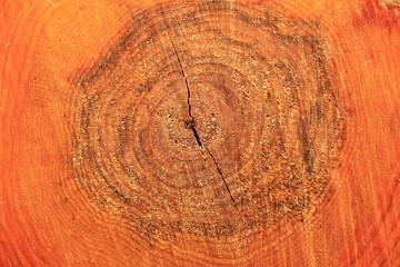 Древесина ольхи в разрезе крупным планом