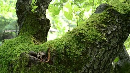Green Moss on Tree