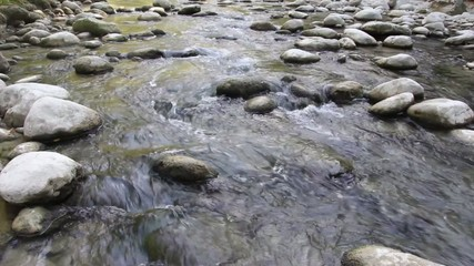 rocky stream in pure nature environment