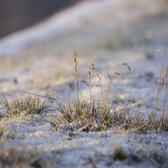 Herbe en hiver