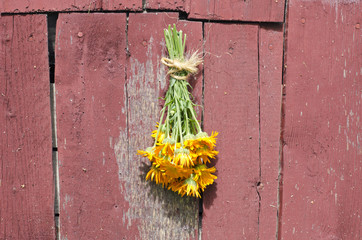 fresh medical calendula marigold flower bunch on old barn wall