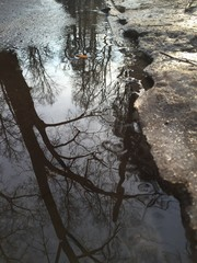 отражение в весеннем ручье