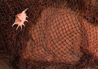 seashells in fishing nets on the sand