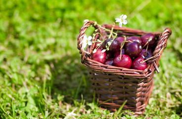 Сherry fruit in basket outdoor