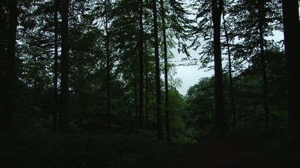 Noisy Forest Ambience after Dusk