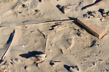 Spiaggia d'inverno, texture