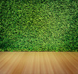 Green leaves wall for background - 79645877