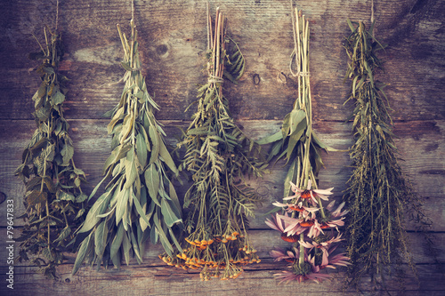 Leinwanddruck Bild Vintage stylized photo of bunches of healing herbs on wooden wal