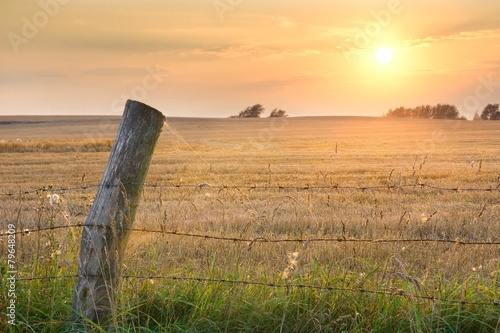 Meadow and fence