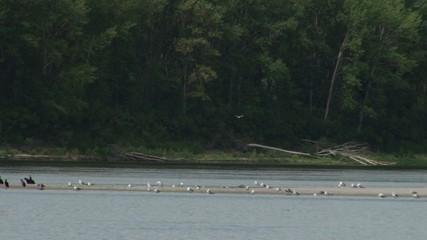 River Bank Birds