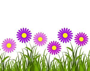 pink daisies border
