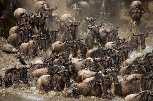 Poster Antilope The Great Migration. Going through the Mara wildebeest.