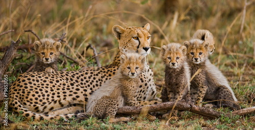 Canvas Afrika The female cheetah with her cubs