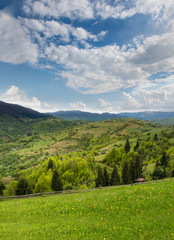 Green meadow and pine forest in the Carpathian Mountains away.