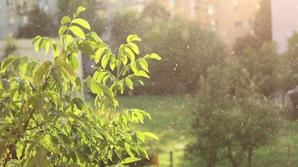 Sunny Blended Autumn Rain