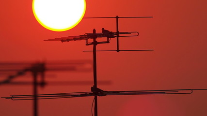 bird on antenna with sunset background, time lapse