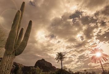 Desert landscape - Phoenix, Arizona