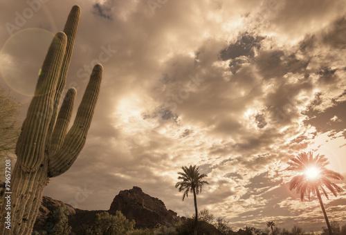Fotobehang Cactus Desert landscape - Phoenix, Arizona