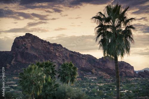 Foto op Canvas Cactus Desert landscape - Phoenix, Arizona